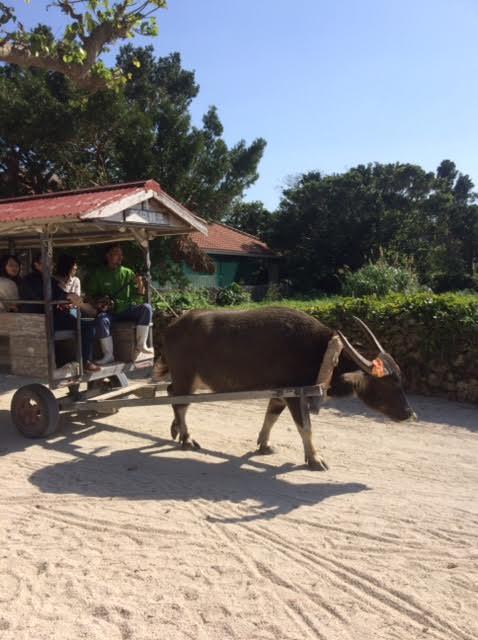 竹富島の水牛車の写真