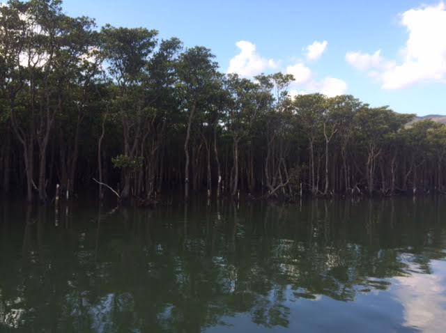 西表島一周ドライブで訪れた仲間川のマングローブクルーズ