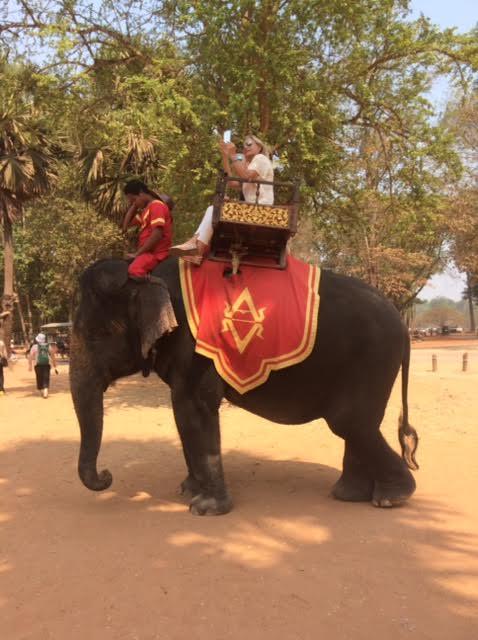 カンボジアのオプショナルツアーで見た象の写真