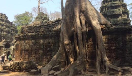 ベンメリア遺跡が良かった!シェムリアップの遺跡で一番おすすめ【カンボジア旅行記】