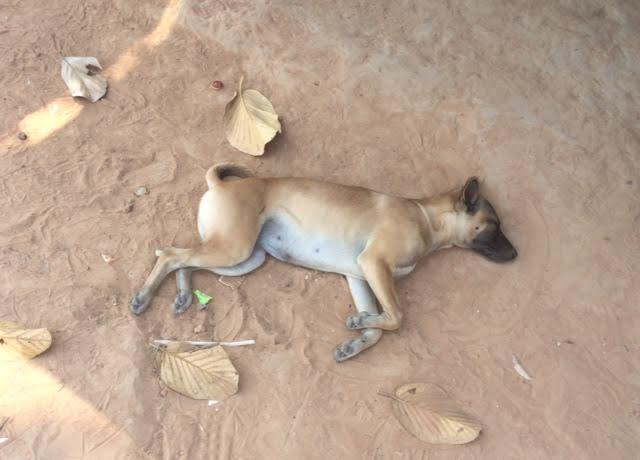 カンボジアひとり旅で撮影した犬の写真