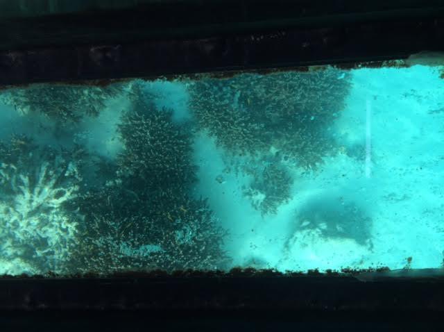石垣島のグラスボートの写真