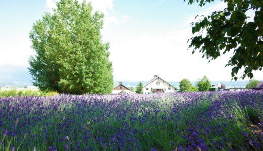 女一人旅の北海道*札幌市内観光~美瑛・富良野の絶景ドライブコース紹介