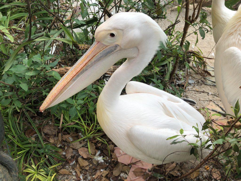 シンガポール動物園の写真